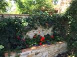 Flowers at Casa Bacciana